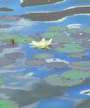 Waterlilies reflection