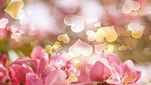 Crabapple blossoms and hearts