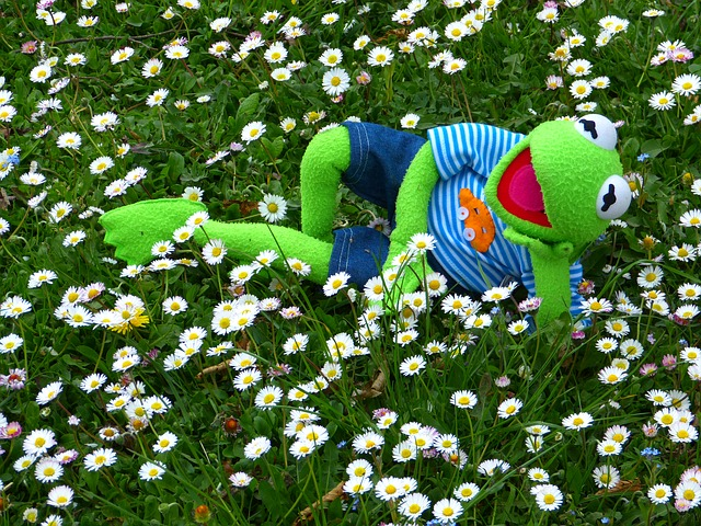 Kermit the Frog resting